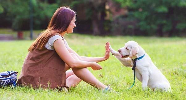 كلب وصاحبه في فصل تدريب الكلاب.